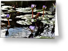 Field Of Lilies  Greeting Card