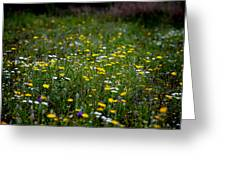 Field Of Mixed Flowers Greeting Card