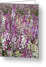 Field Of Multi-colored Flowers Greeting Card