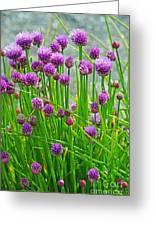 Field Of Onions  Greeting Card