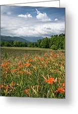 Field Of Orange Daylilies Greeting Card