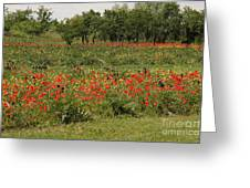 Field Of Poppies On Torcello In Venice Greeting Card