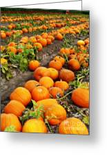 Field Of Pumpkins Card Greeting Card