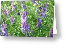 Field Of Purple Dreams Greeting Card by D R TeesT