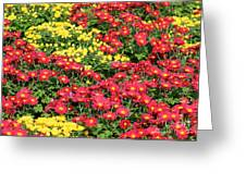 Field Of Red And Yellow Flowers Greeting Card