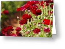 Field Of Red Greeting Card