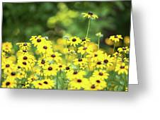 Field Of Smiles Greeting Card