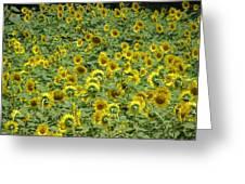 Field Of Sun Greeting Card