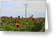 Where The Sunflowers Shine Greeting Card