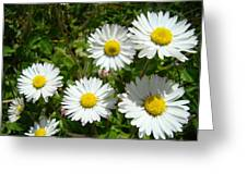 Field Of White Daisy Flowers Art Prints Summer Greeting Card