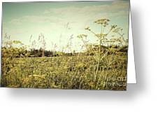 Field Of Wild Dill In The Afternoon Sun  Greeting Card by Sandra Cunningham