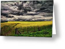 Field Of Yellow Flowers Greeting Card