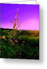 Field Rye And Ear Greeting Card