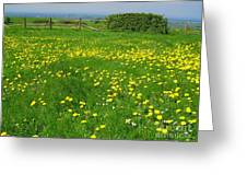 Field With Yellow Flowers Greeting Card