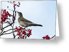 Fieldfare - 2 Greeting Card