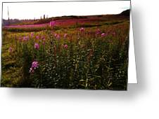 Fields In Pink Greeting Card