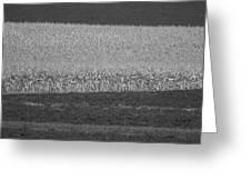 Fields Near Madison Greeting Card