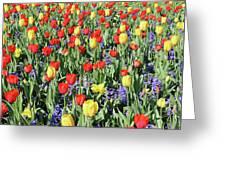 Fields Of Beauty 64 Greeting Card