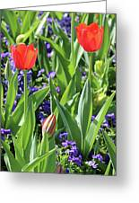 Fields Of Beauty 79 Greeting Card