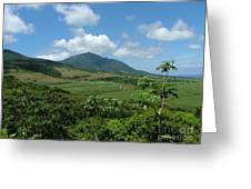 St. Kitts Fields Of Cane Greeting Card