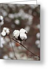 Fields Of Cotton Greeting Card