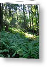 Fields Of Ferns Greeting Card
