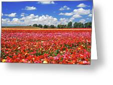 Fields Of Flowers At Nir Banim Greeting Card