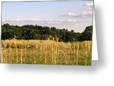 Fields Of Grain Greeting Card