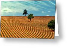 Fields Of Provence Greeting Card