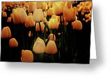 Fields Of Yellow Tulips Greeting Card