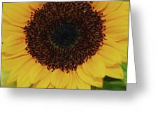 Fiery Bloom Greeting Card