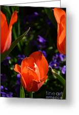 Fiery Colored Tulips Greeting Card