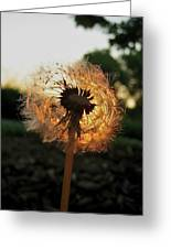 Fiery Dandelion Greeting Card