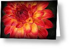Fiery Red And Yellow Dahlia Greeting Card