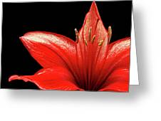 Fiery Red Greeting Card