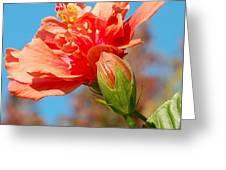 Fiesta Time Greeting Card