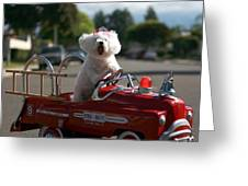 Fifi The Bichon Frise To The Rescue Greeting Card