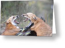 Fight For Dominance Greeting Card