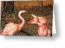 Fighting Flamingos Greeting Card