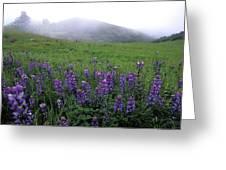 Figueroa Mountain With Fog Greeting Card