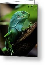 Fiji Iguana In Profile On Tree Branch Greeting Card