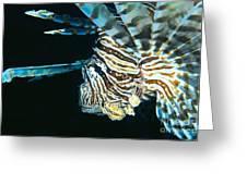 Fiji, Lionfish Greeting Card