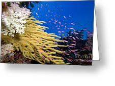 Fijian Reef Scene Greeting Card