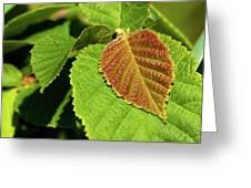 Filbert Leaf Greeting Card