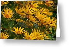 Filled With Sunflowers Horizontal Greeting Card