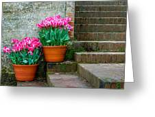 Filoli Tulips Greeting Card
