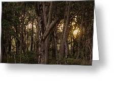 Filtered Sunlight Greeting Card