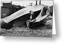 Fin Whale 69 Feet Long At Fields Landing Whaling Station Circa 1945 Greeting Card