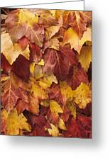 Final Fall In File Greeting Card