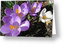 Finally Spring Greeting Card